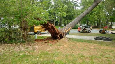 Tree Removal in Mooresville, North Carolina