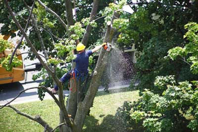 Top Reasons to Consider Tree Removal for Your Property