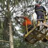 Tree Trimming in Lake Norman, North Carolina