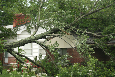 Tree Removal to Improve the Safety of Your Home