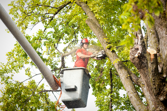 3 Reasons to Spring for an Arborist
